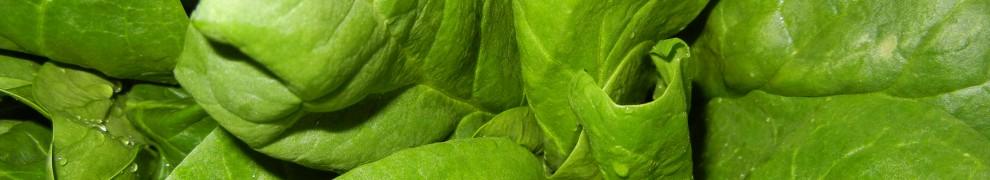 Gastroparesis | Gastroparesis & Gastronomy